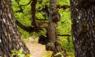 Bosc de la Rourera